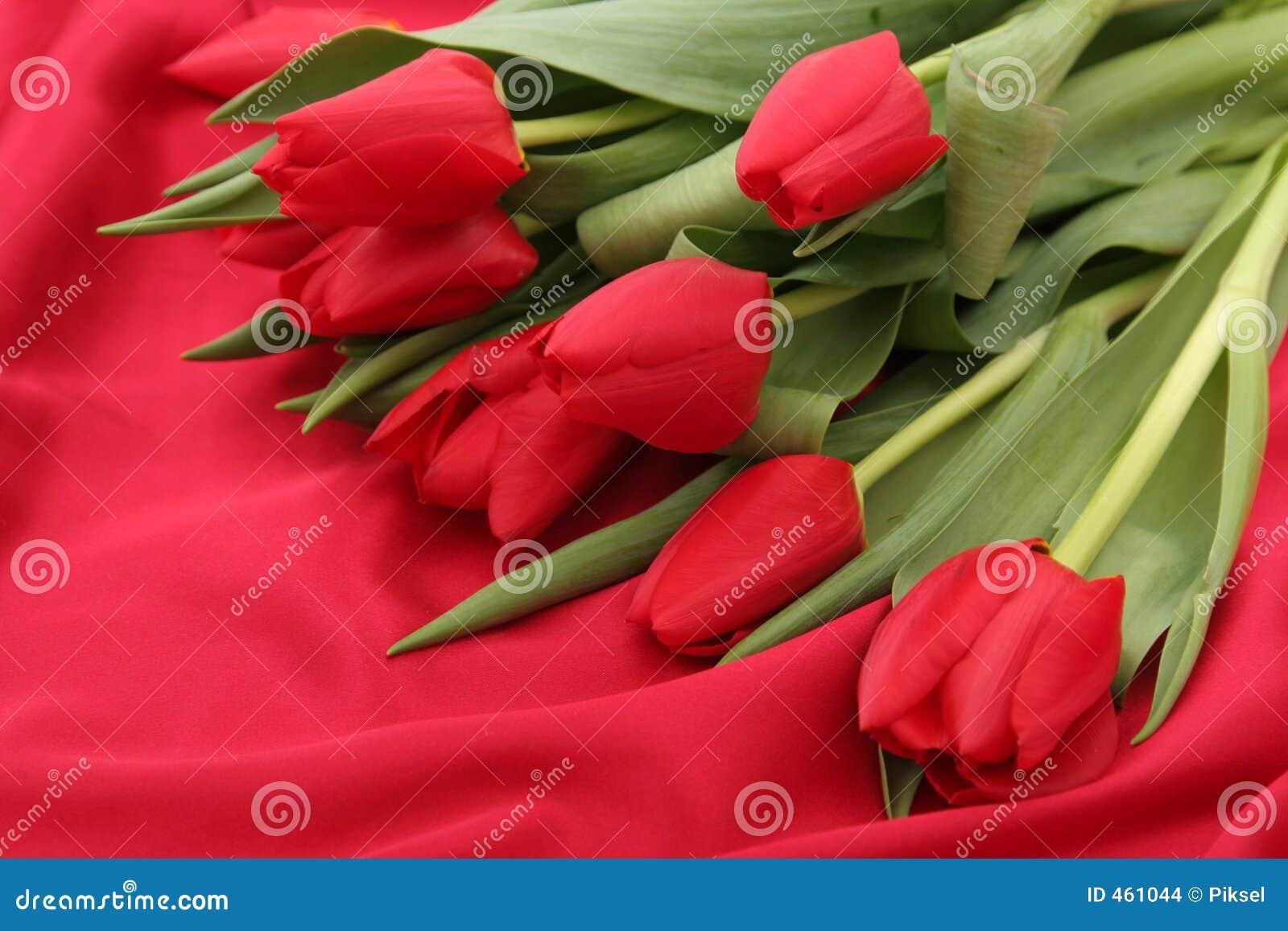 Tulips on Satin