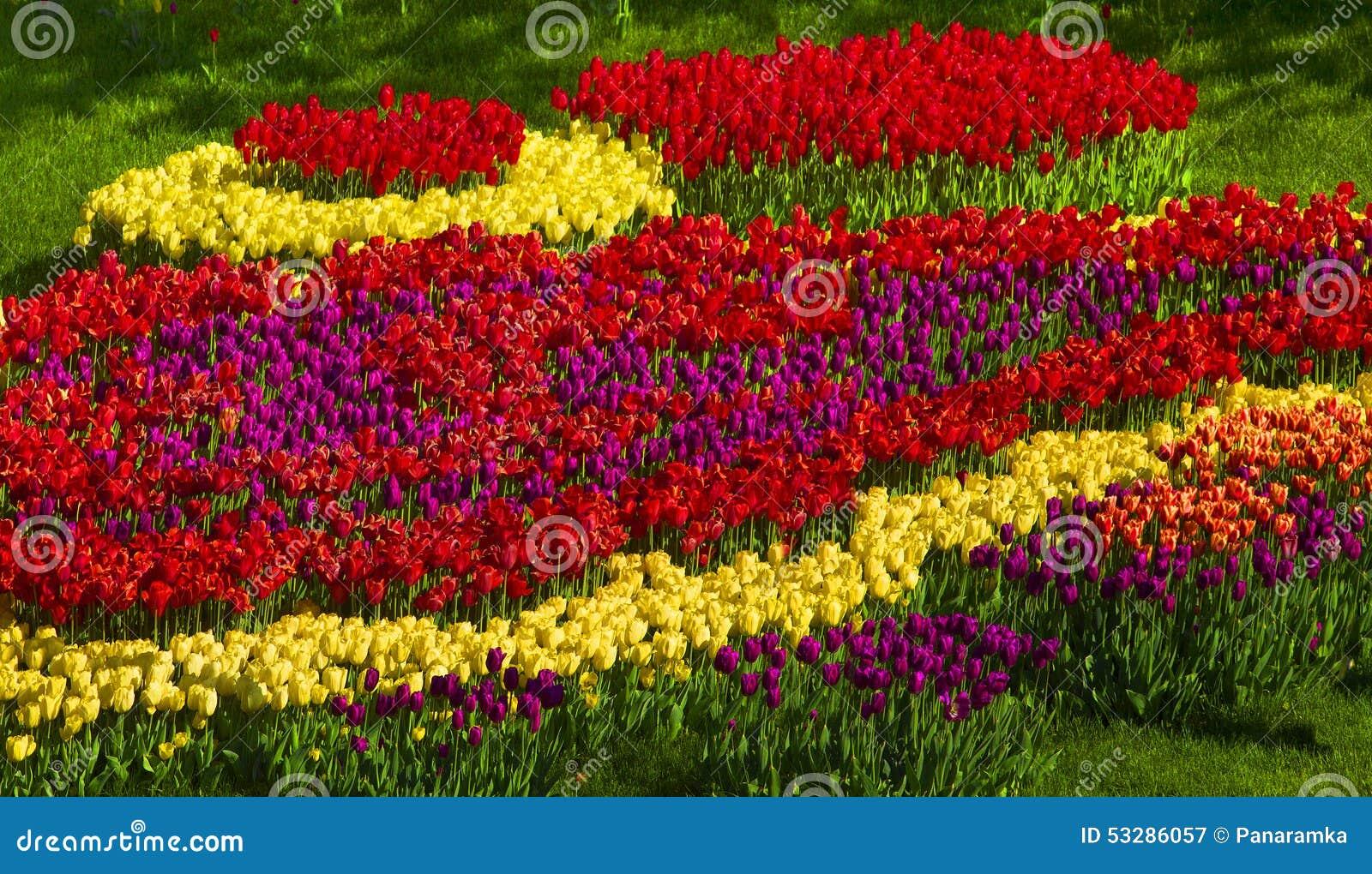Tulips Spring Flowers Stock Image Image Of Garden 53286057
