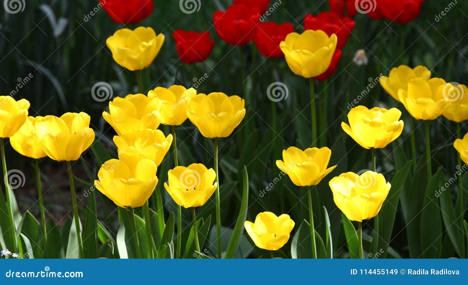 Outstanding color of poppy flowers frieze coloring page colors of poppy flowers image collections flower decoration ideas mightylinksfo