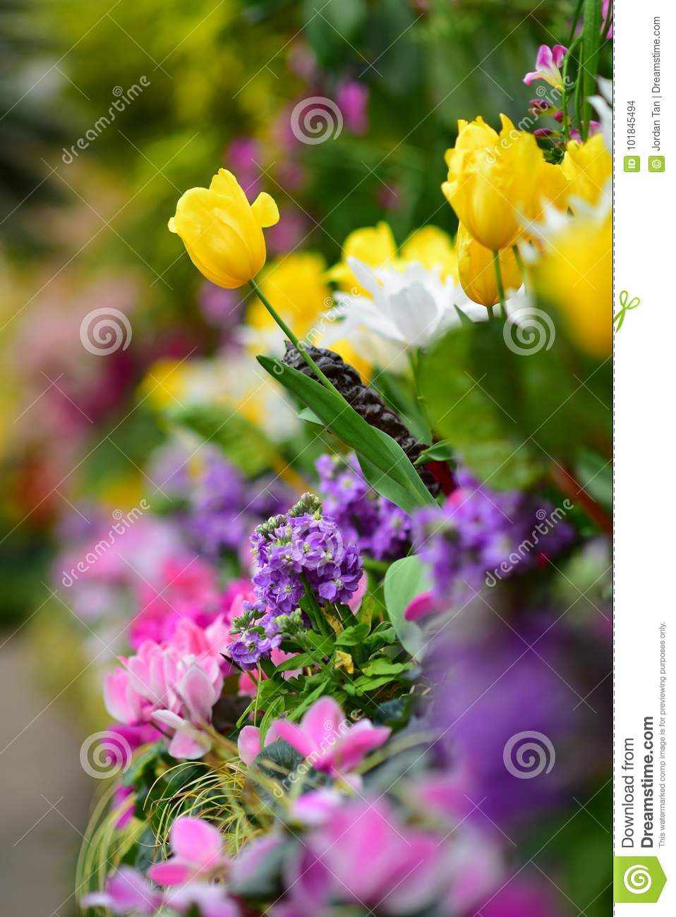 Tulips And Various Species Of Colorful Flowers Blooming During