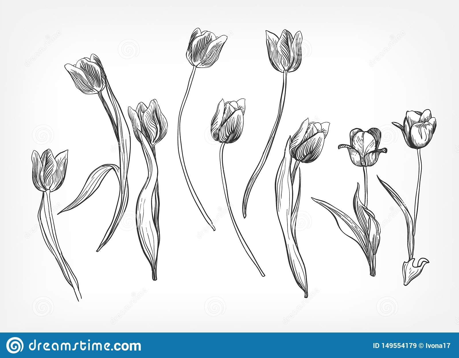 Tulips vector design elements simple sketch isolated