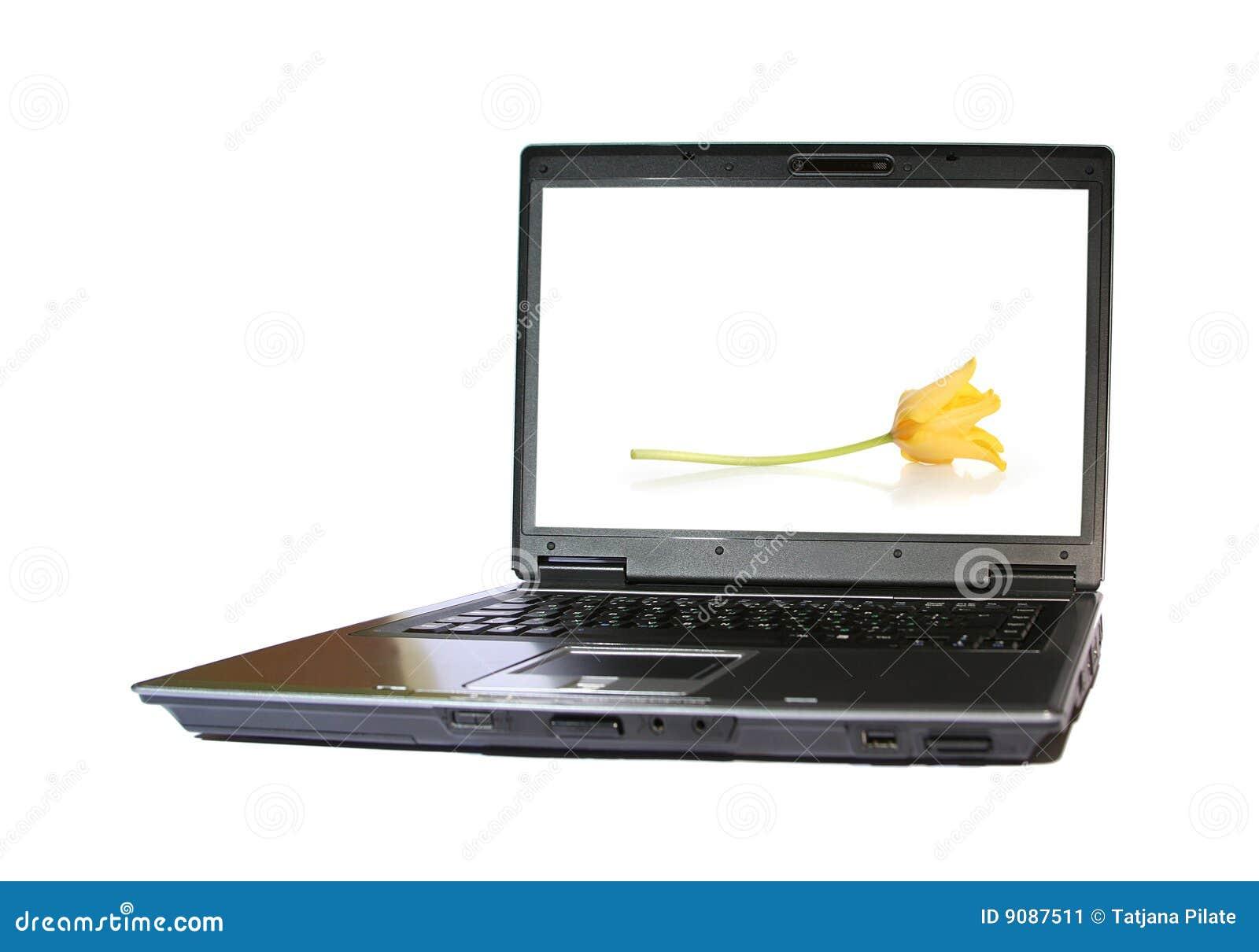 Tulpe auf dasctop