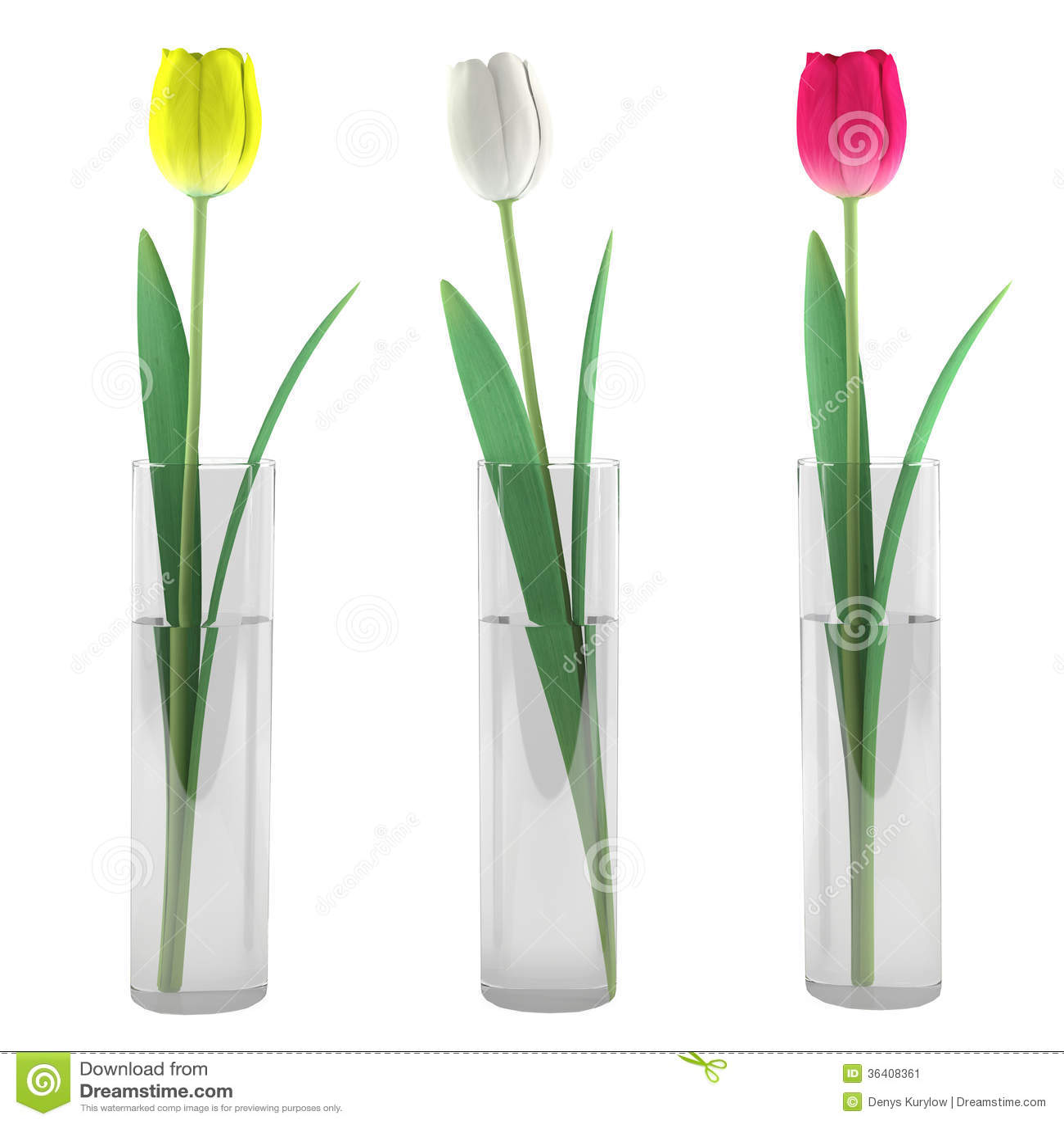 Tulpe im Glasvase
