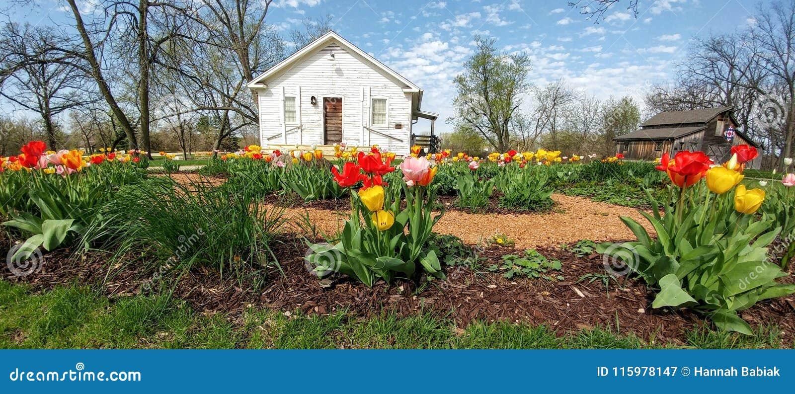Tulpen, das Weiße Haus, Beckman-Mühle, Beloit, WI