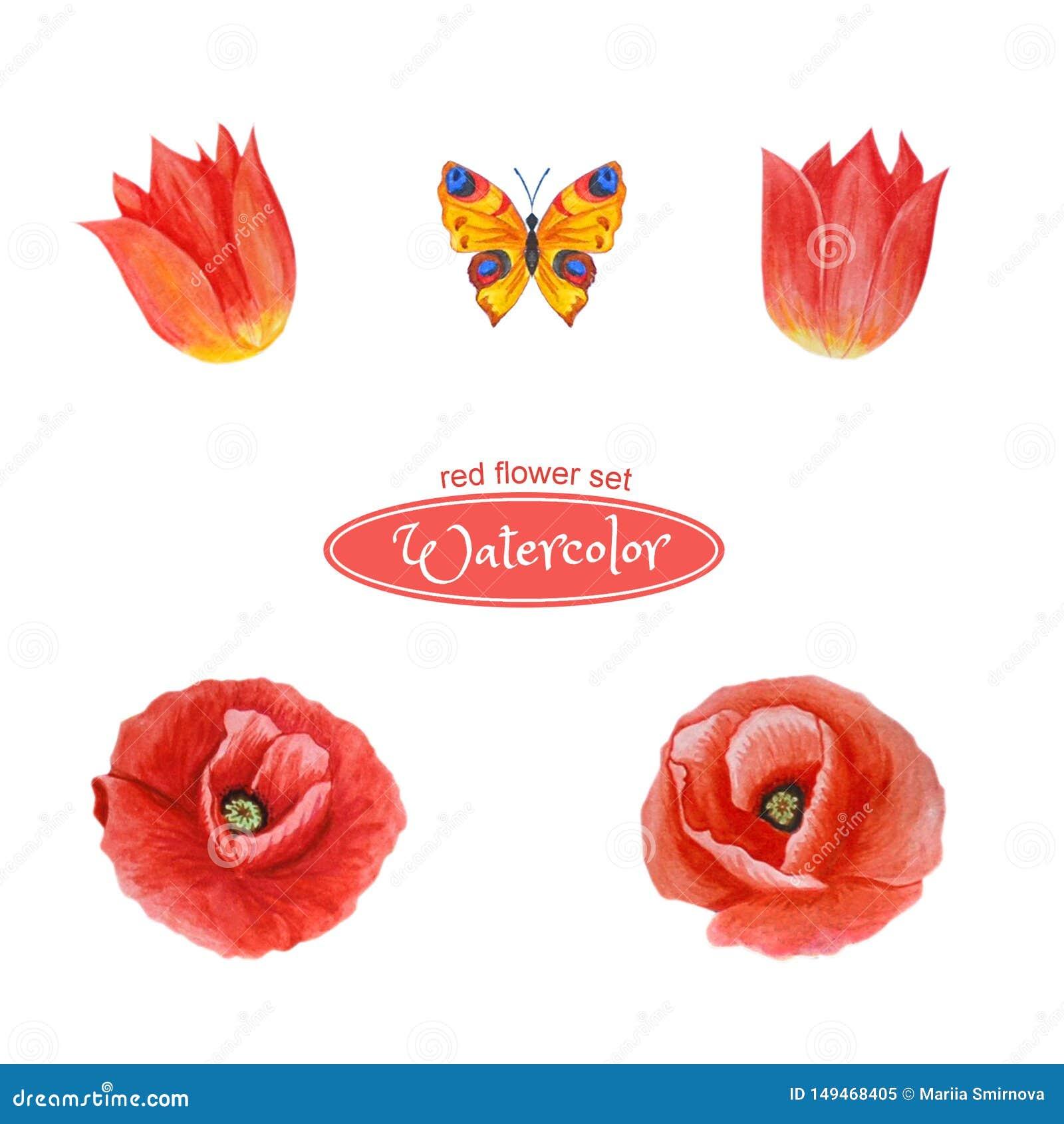 Tulpen en papaver, bloemhoofden Ge?soleerdj op witte achtergrond