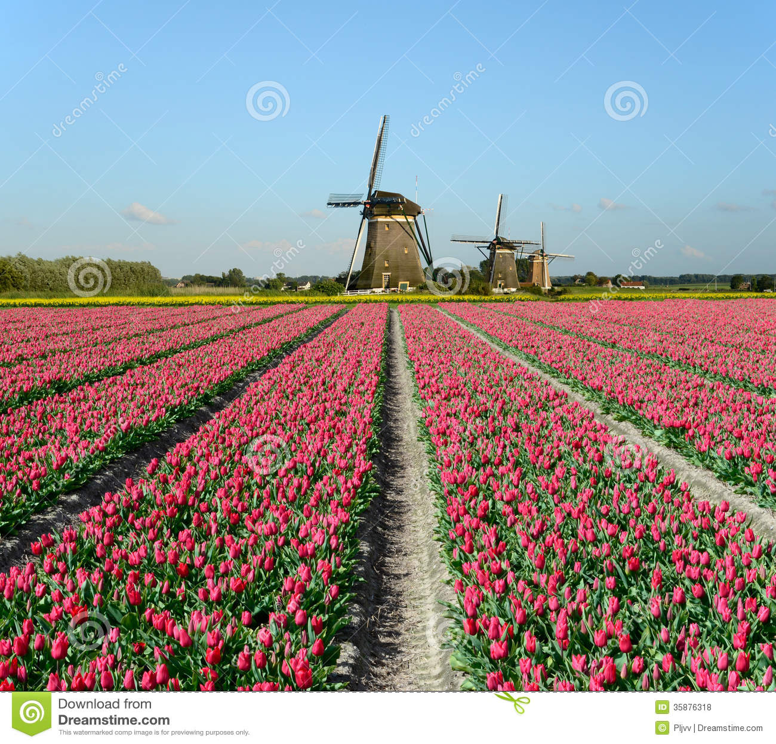 tulpen en windmolens in holland stock foto afbeelding 35876318. Black Bedroom Furniture Sets. Home Design Ideas