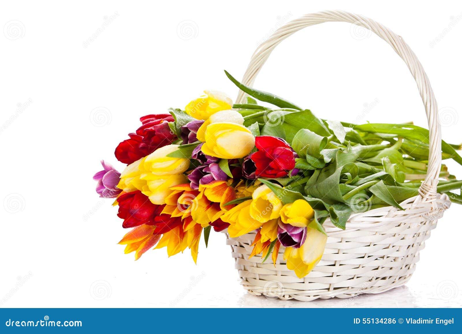 Tulpen Im Korb Lokalisiert Auf Weißem Hintergrund Farben ...