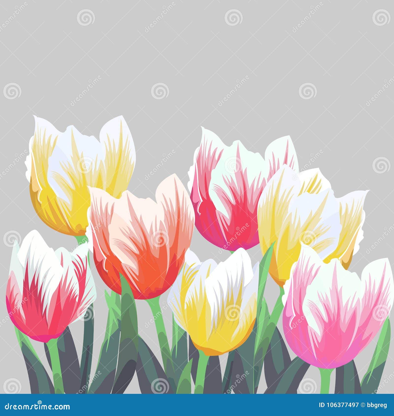 Tulpen Kleuren vectordietulpen op grijze achtergrond worden geïsoleerd Bloemen in verschillende vormen voor uw ontwerp en groeten