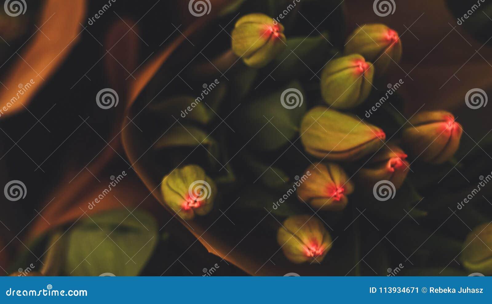 Tulpen mit tiefen grellen Farben