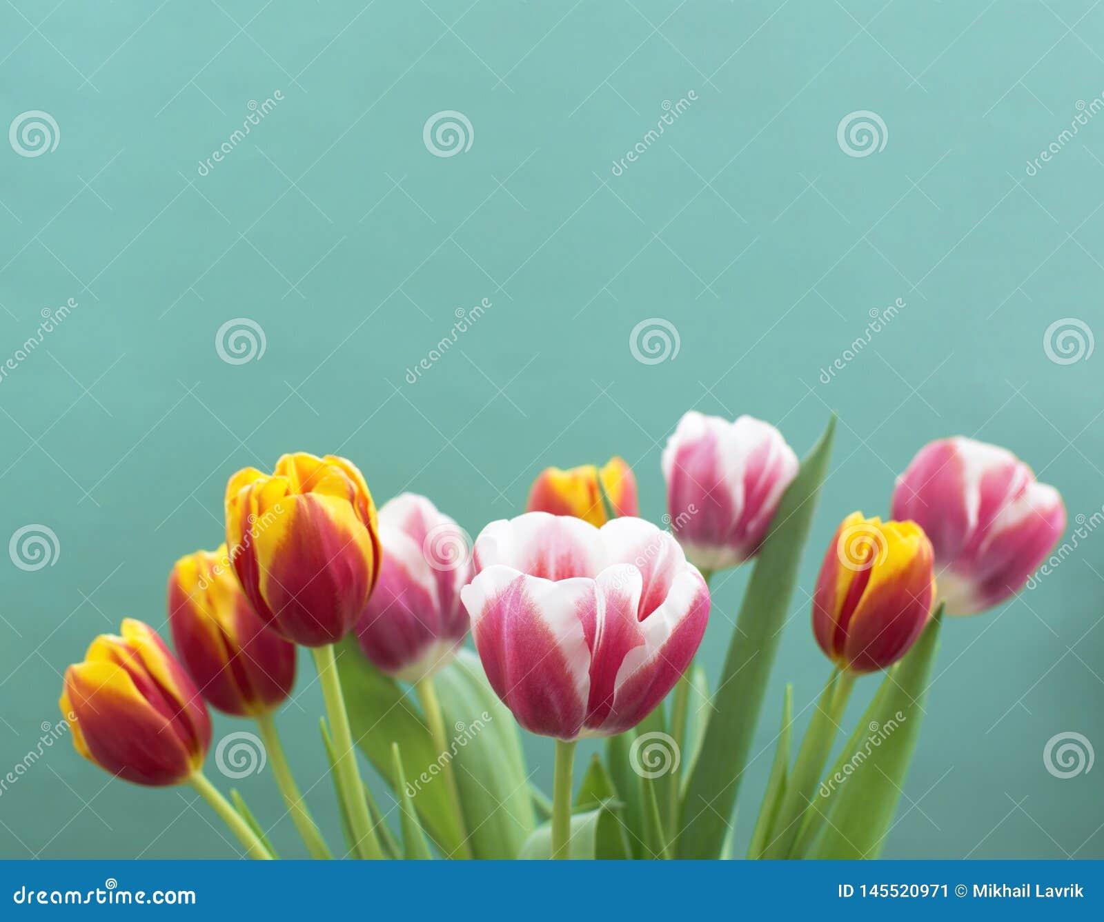 Tulpen op een blauwe achtergrond