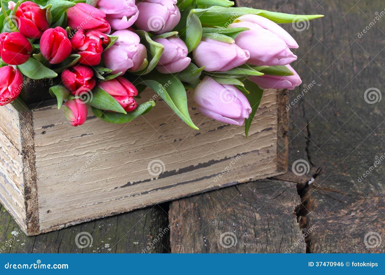 Tulpen voor verkoop