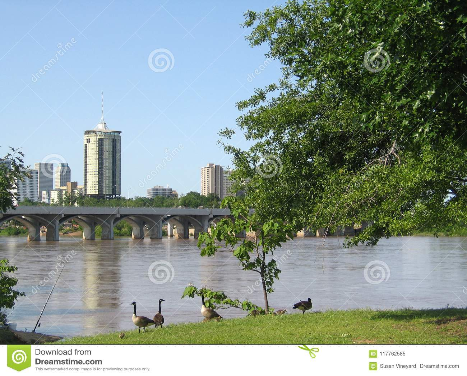 Tulsa Oklahoma do Cisjordânia do Arkansas River com gansos do bebê e um polo de pesca