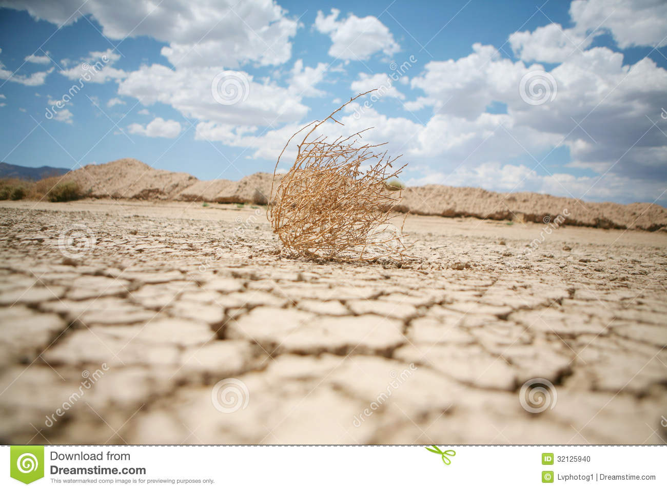 Tumbleweed in the desert