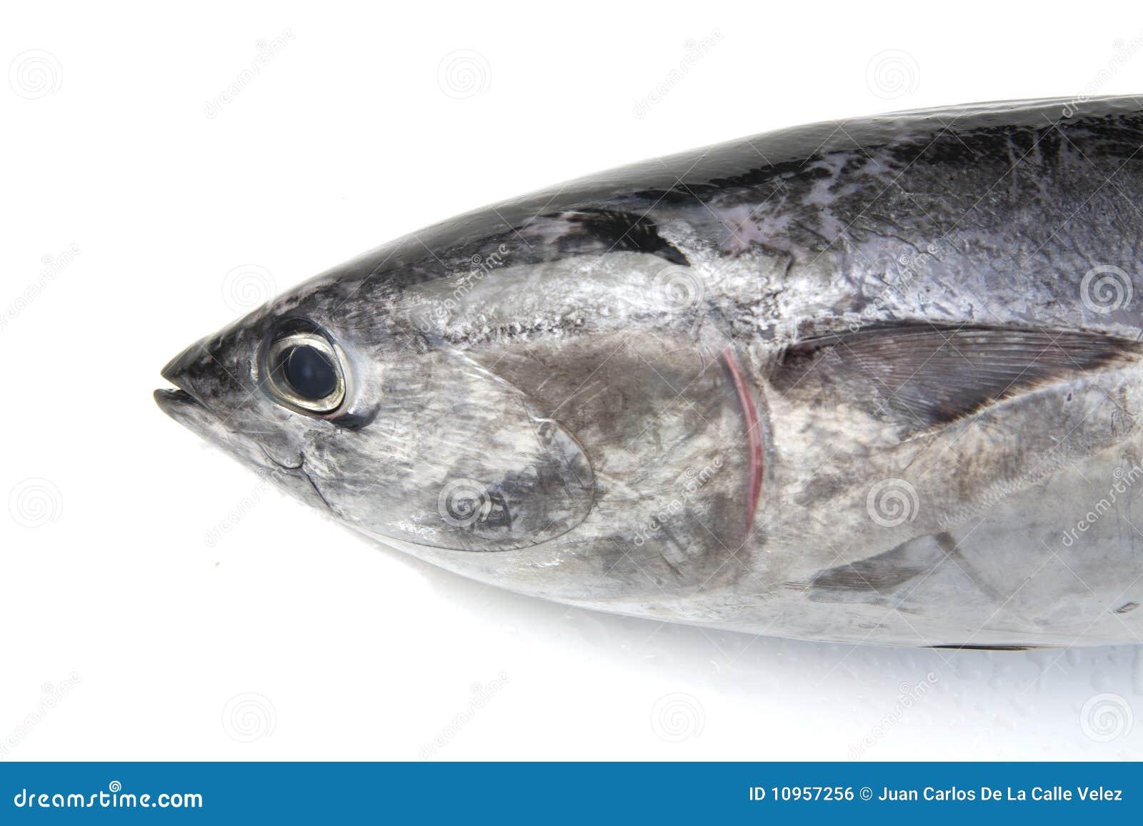 Tuna fish head stock photo image of seafood fish for Is tuna fish healthy