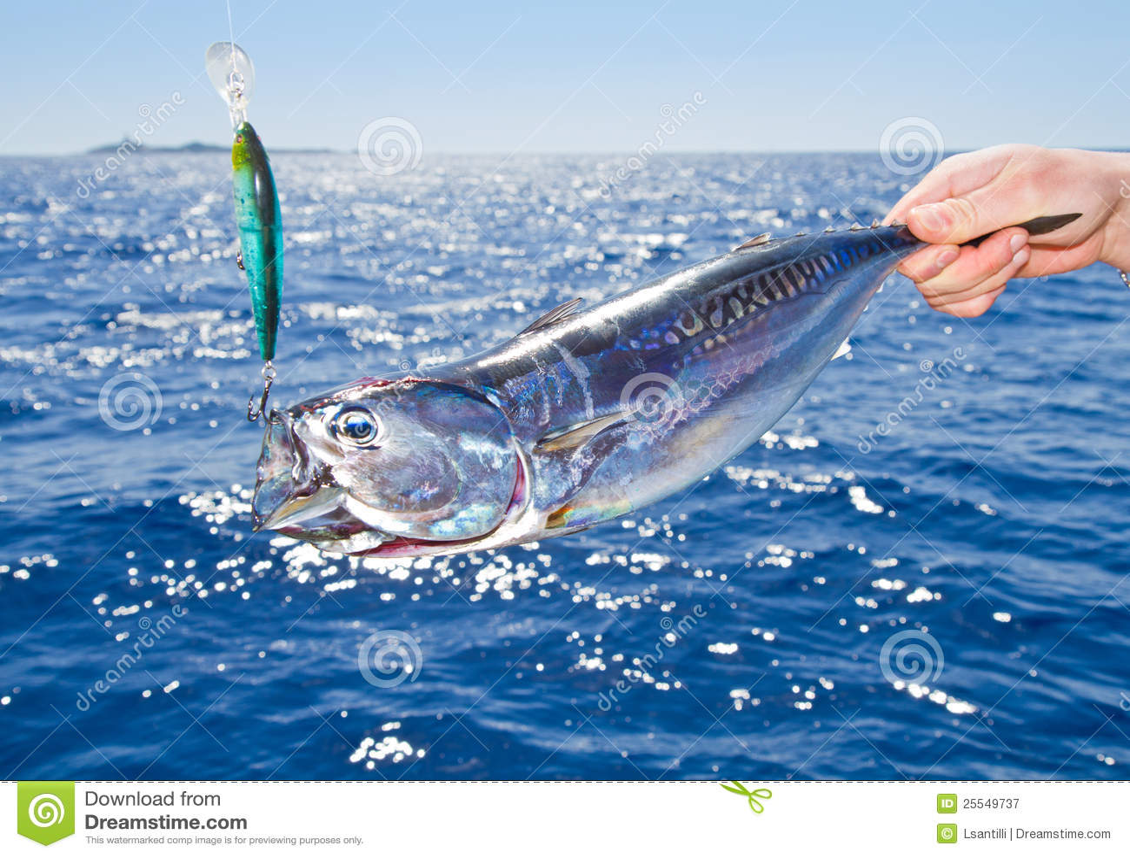 Tuna mediterranean big game fishing royalty free stock for Tuna fishing games