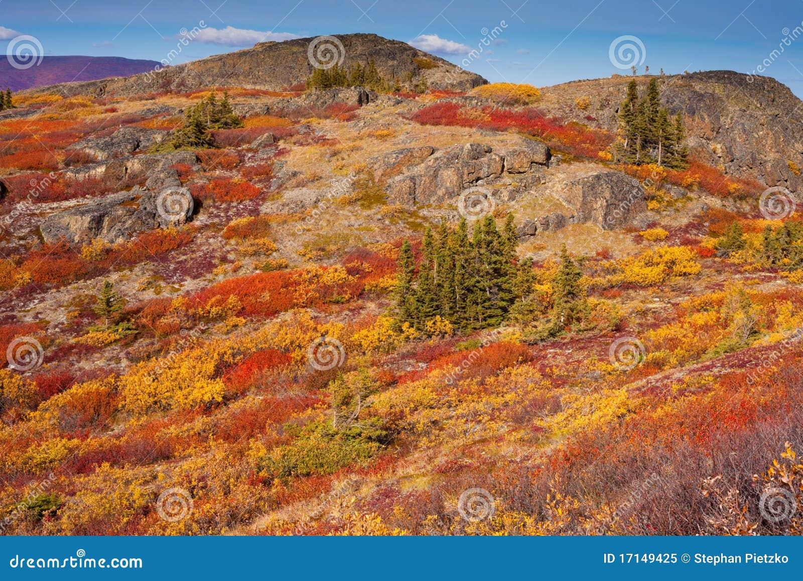 Tundra alpestre