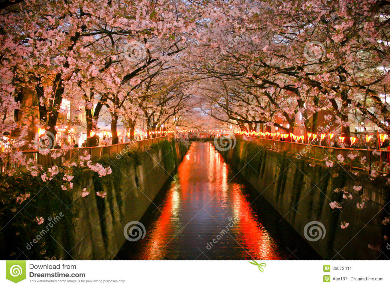 Tunnel of Cherry blossom (Sakura blooming) in at Meguro, Tokyo, Japan.