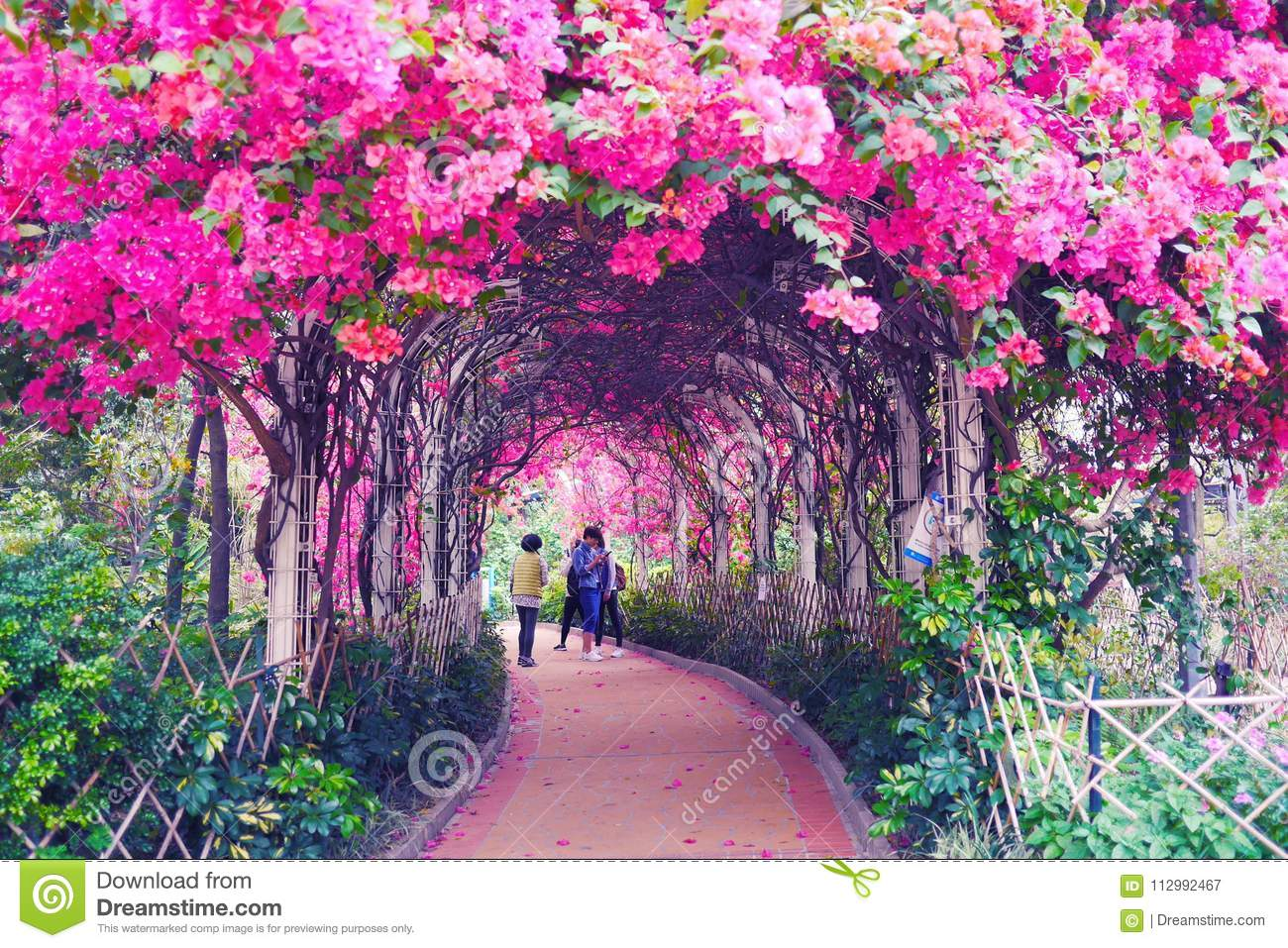 Tunnel through climbing so many Pink flowers. So Romantic flower Tunnel.