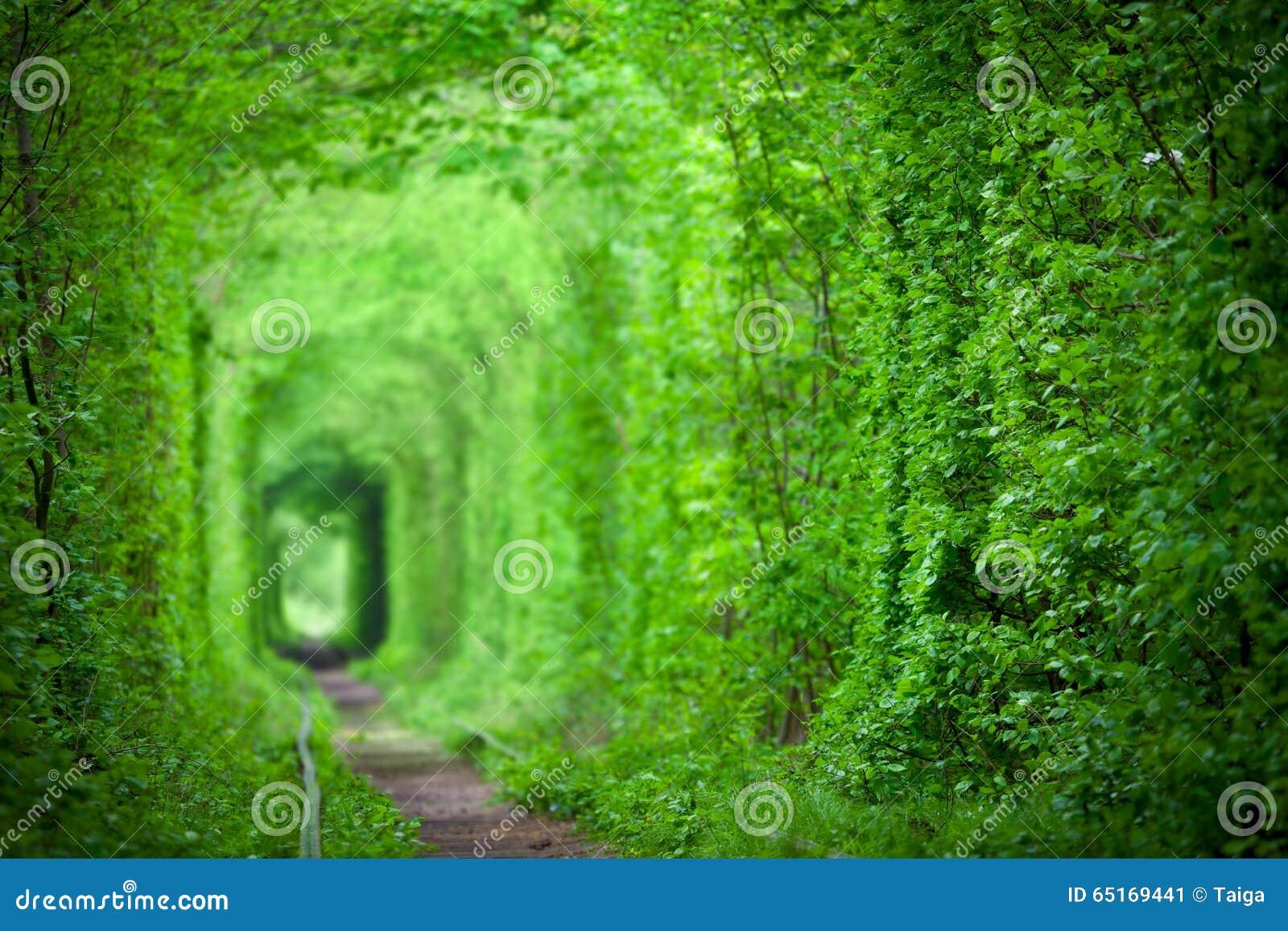 Tunnel dell amore magico, alberi verdi ed i precedenti della ferrovia