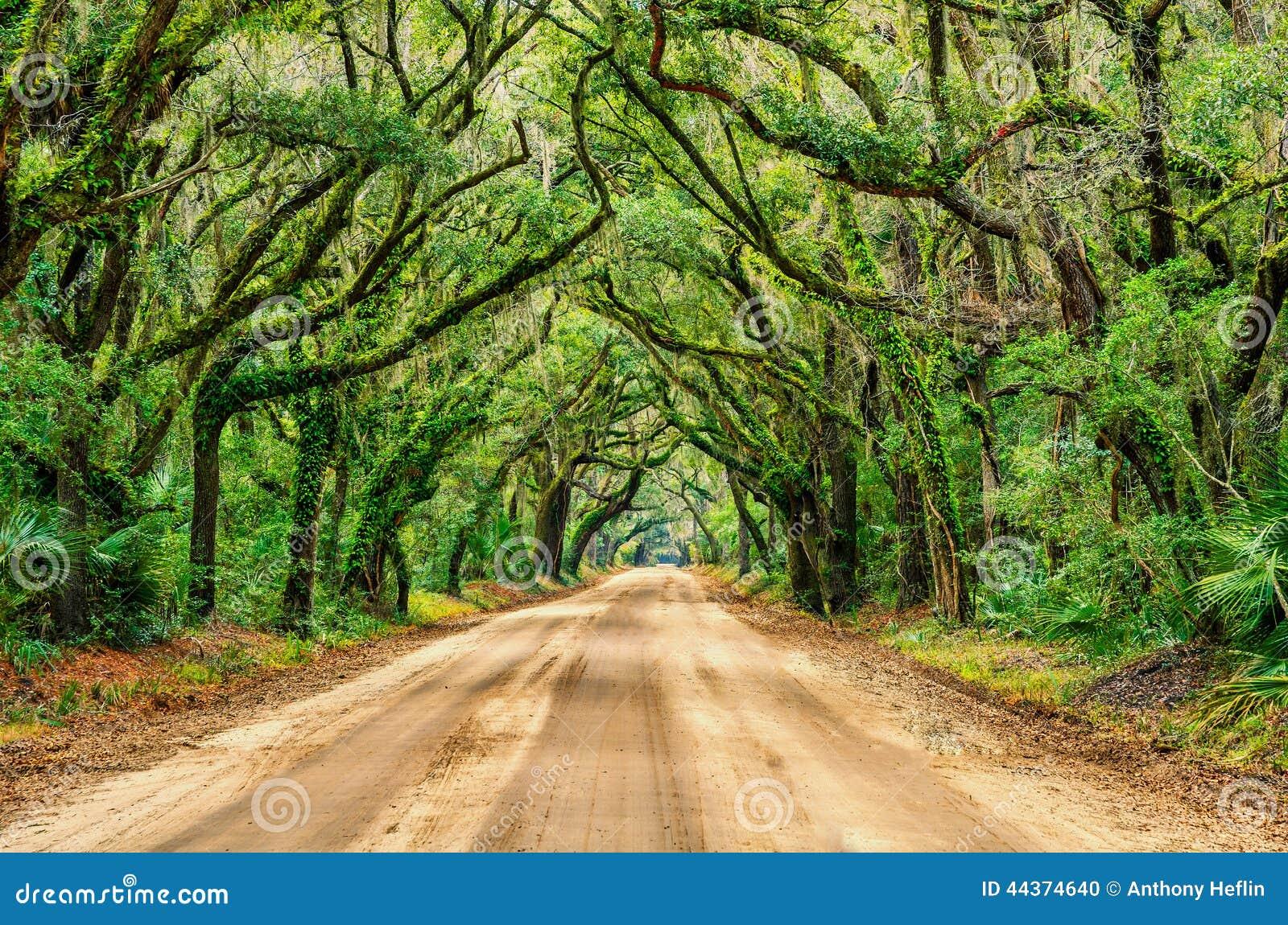 Tunnel delle querce, baia di botanica, Carolina del Sud