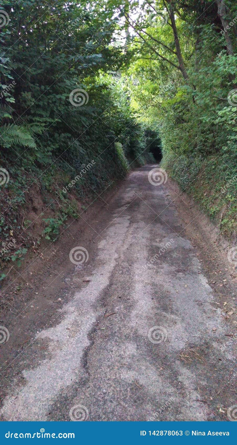 Tunnel donkere weg