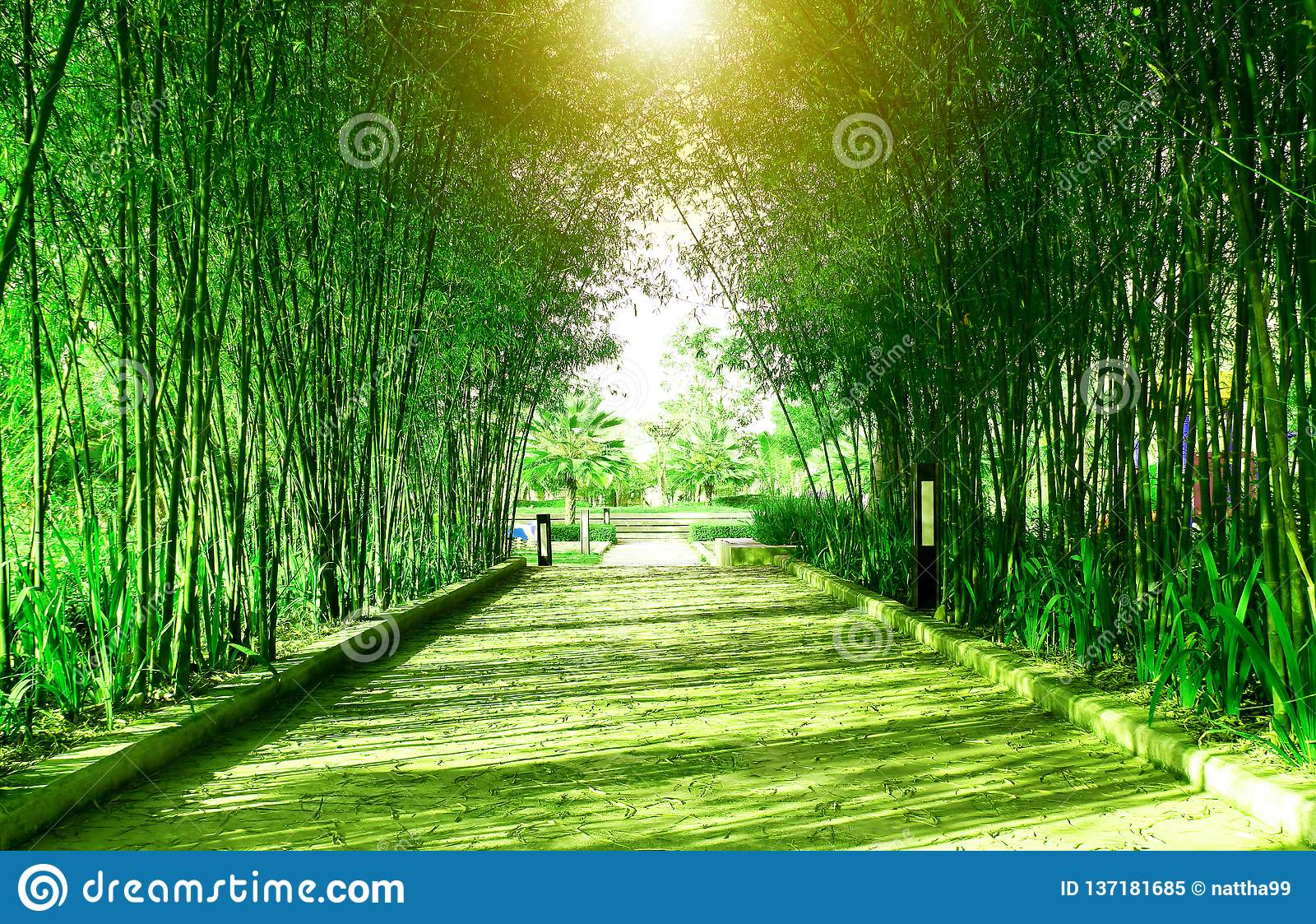 Tunnel green bamboo forest and walk way in the public park