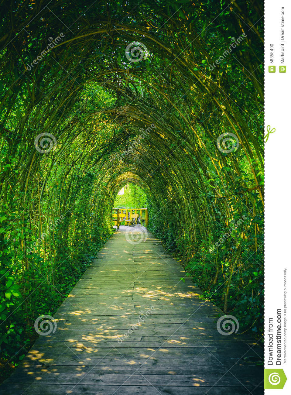 Tunnel From Ivy Stock Photo Image 58358490