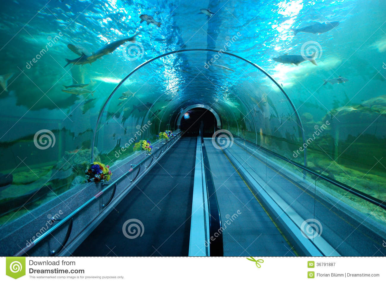 tunnel sous marin dans le grand aquarium de plain pied photographie stock libre de droits