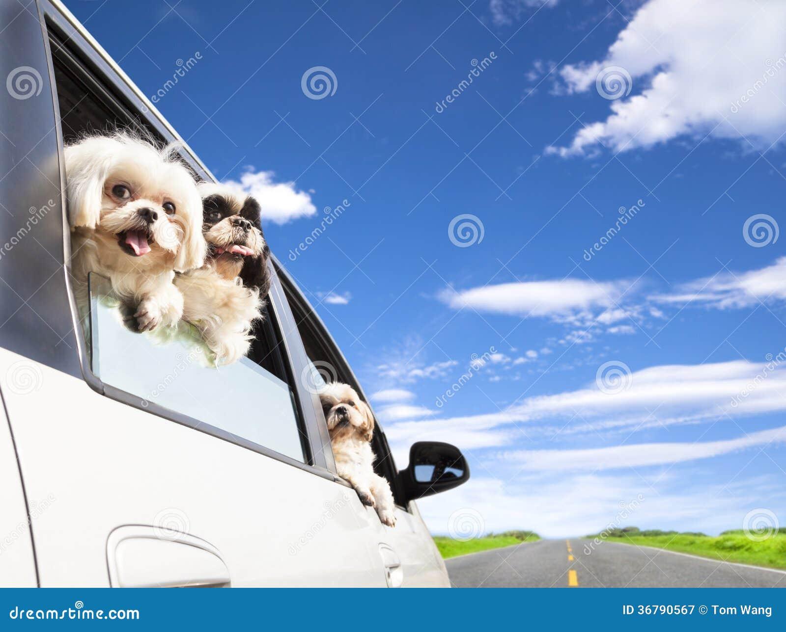 Tur för väg för hundfamilj resande