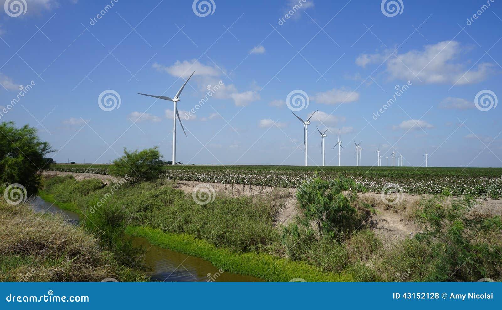 Turbinas de viento en campo del algodón