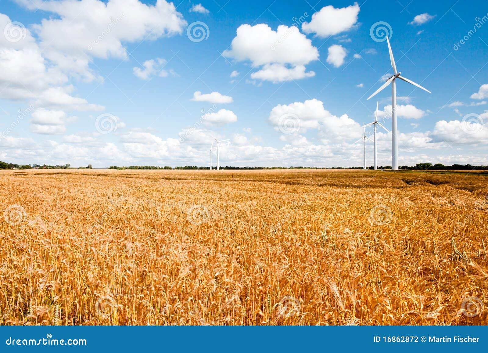 Turbinas de viento a lo largo del campo de trigo