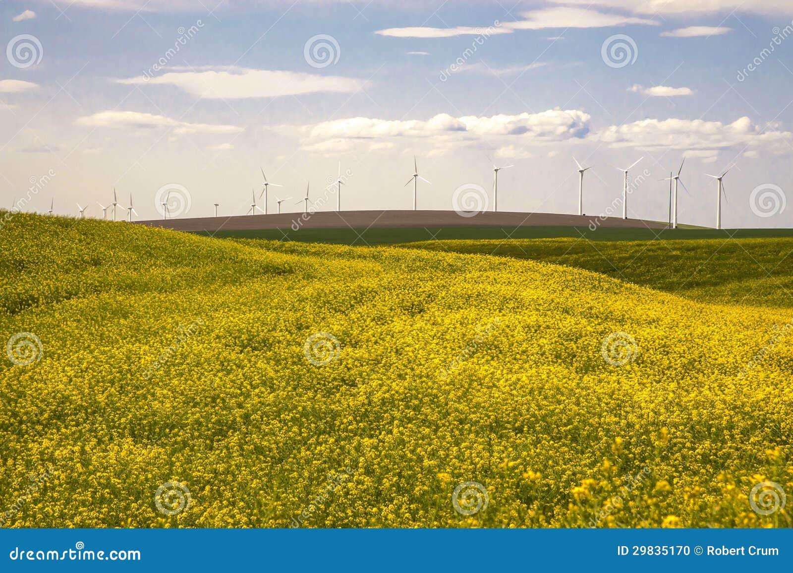 Turbinas eólicas em um campo de flores amarelas