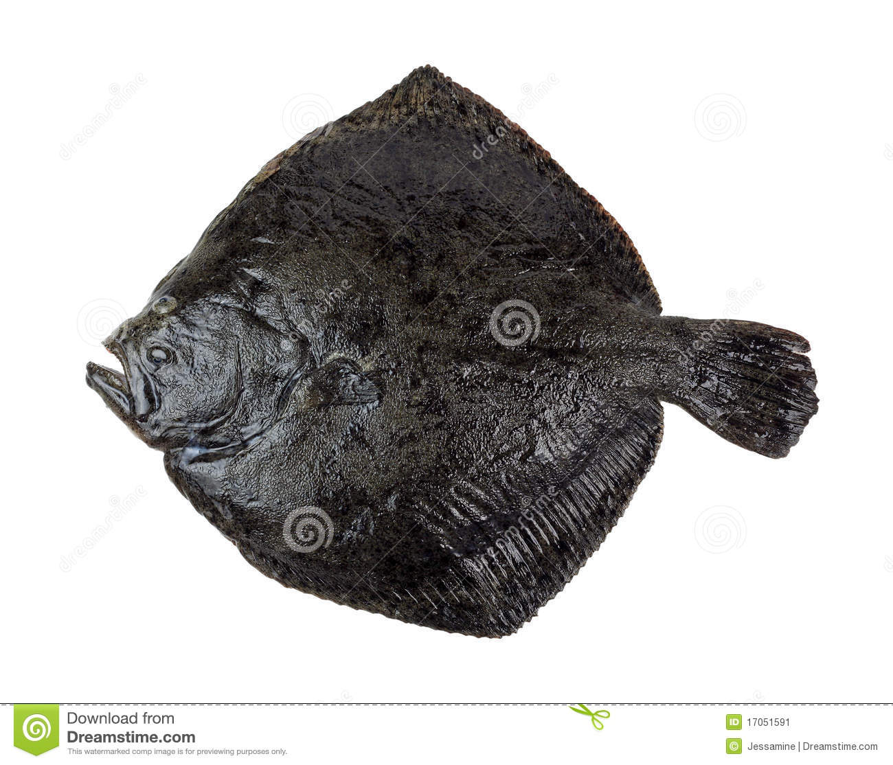 Turbot fish stock image image 17051591 for Turbot fish price