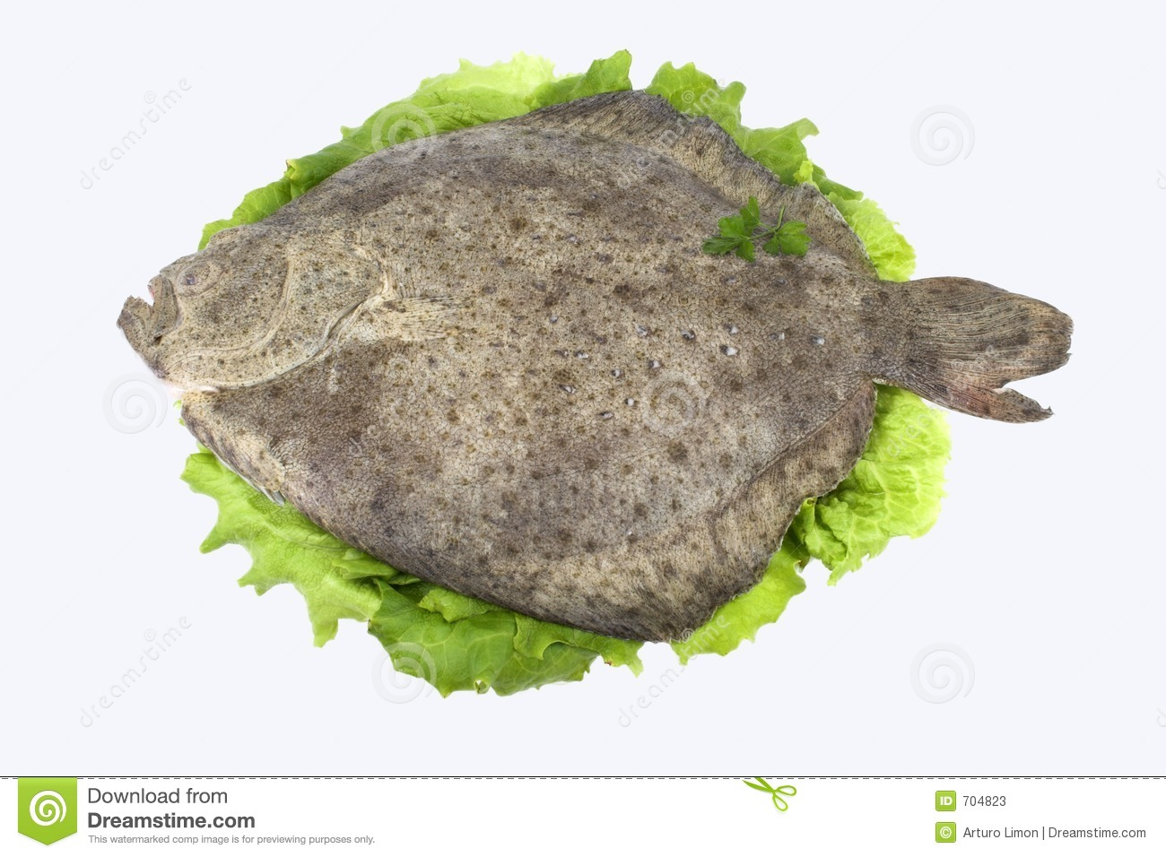 Turbot fish stock photos image 704823 for Turbot fish price