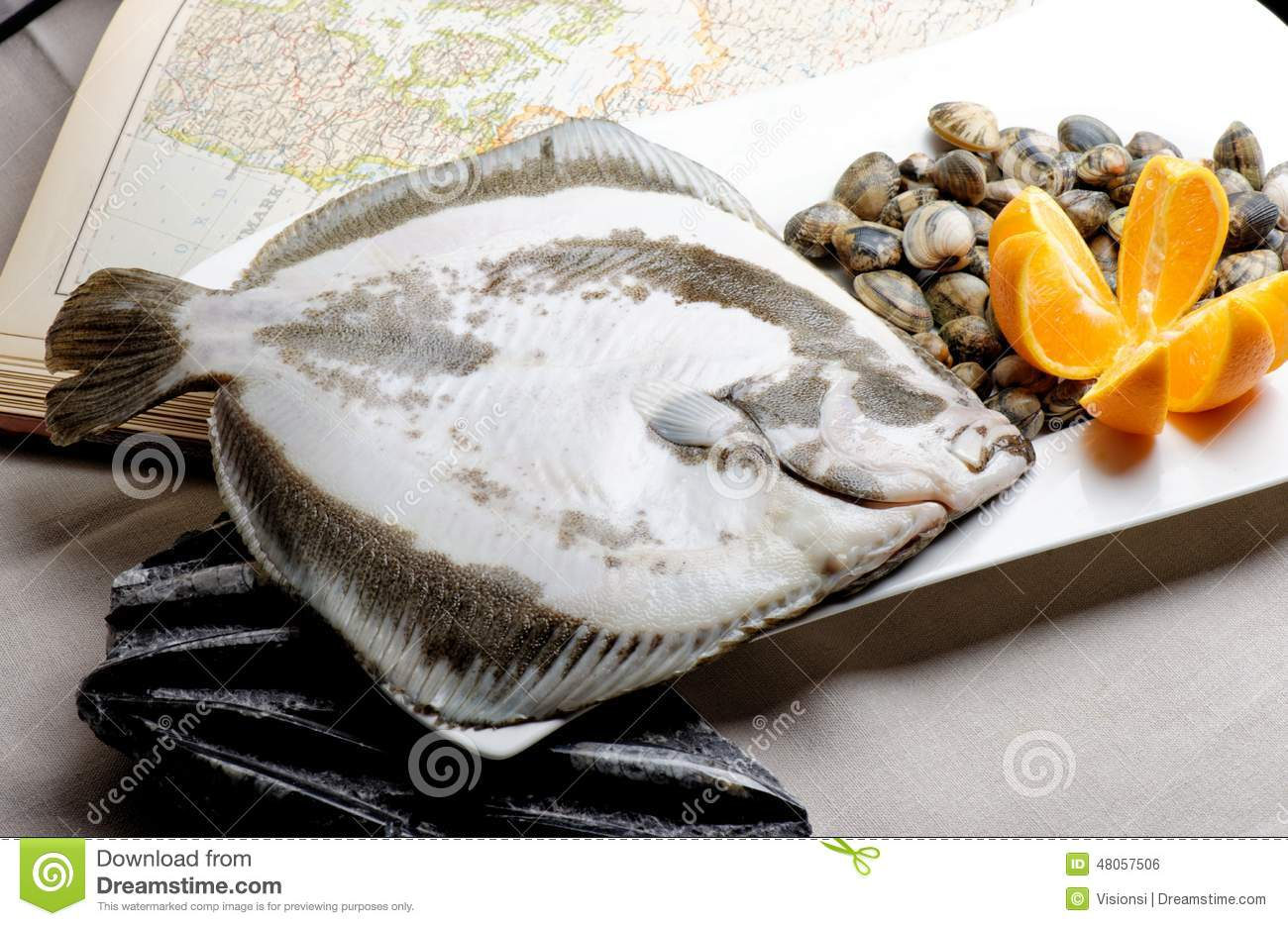 Turbot fish and clams stock photo image 48057506 for Turbot fish price