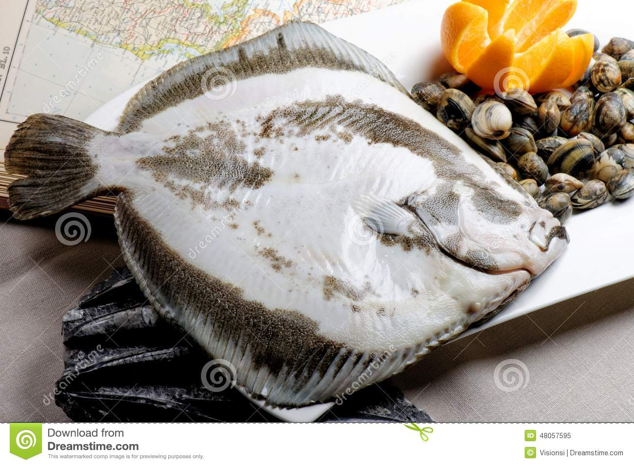 Turbot fish and clams stock image image of appetizer for Turbot fish price