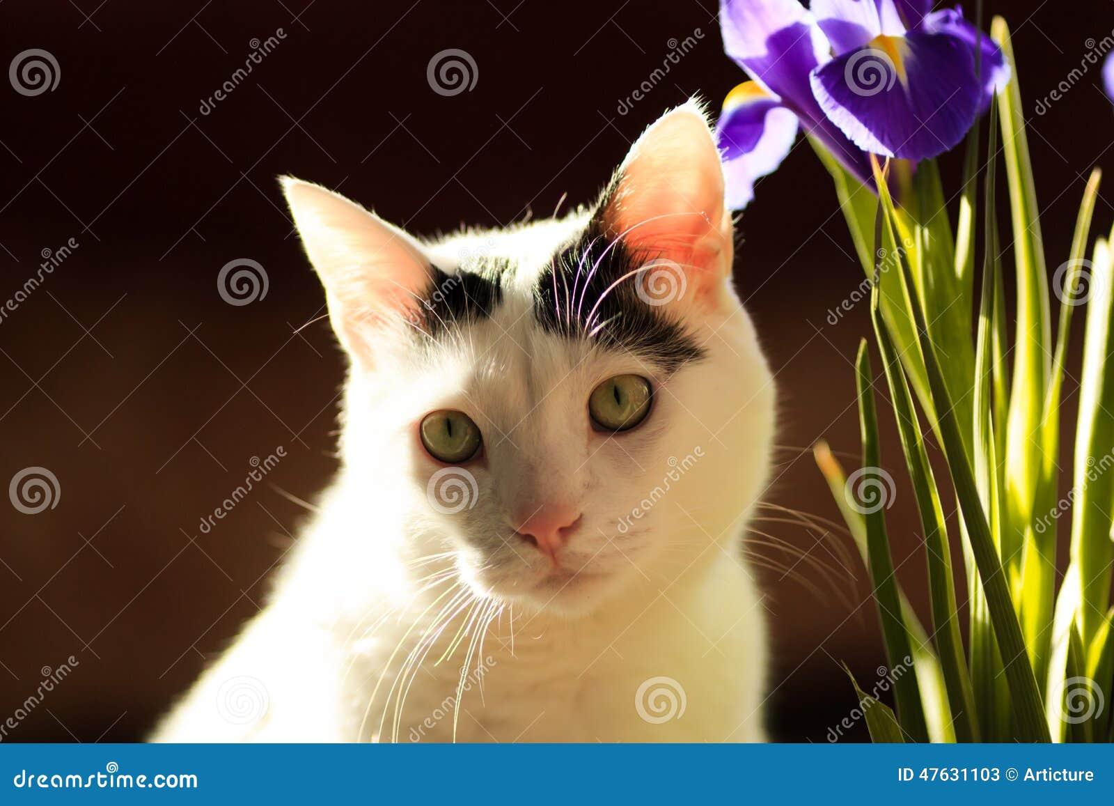 Turco Van Cat