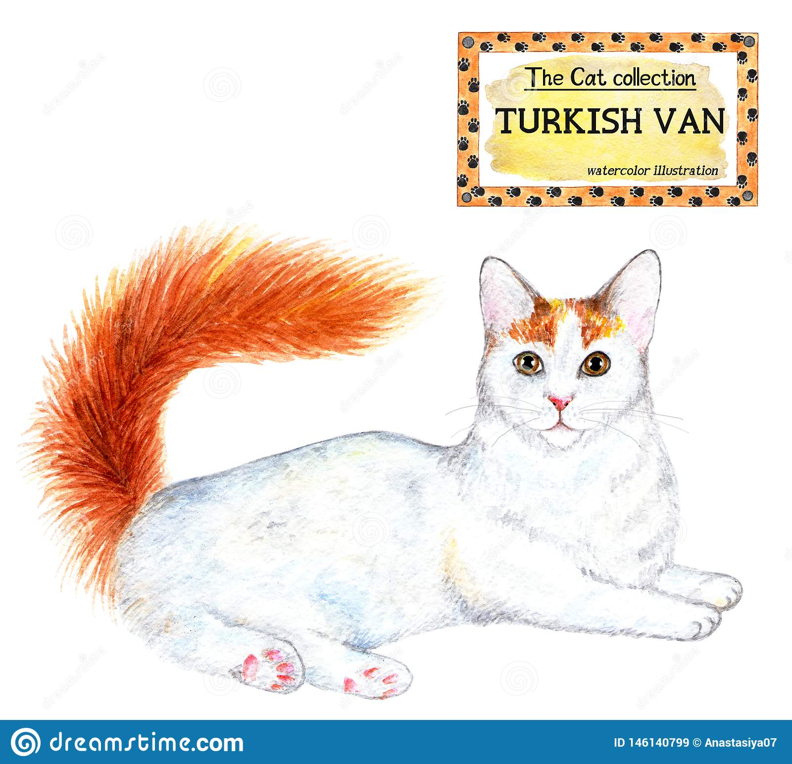 Turco Van Cat La colecci?n del gato Ilustraci?n de la acuarela