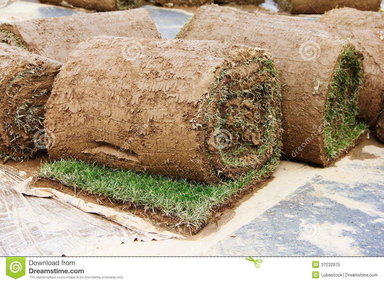 how to cut and roll sod