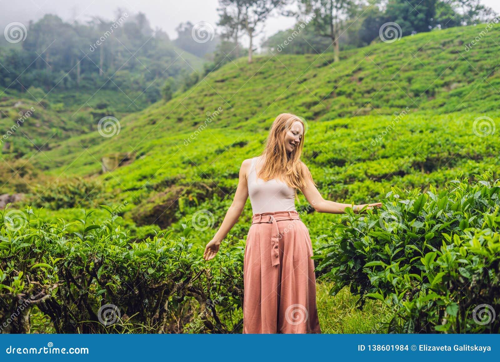 Turista das mulheres em uma plantação de chá As folhas de chá selecionadas, frescas naturais no chá cultivam em Cameron Highlands