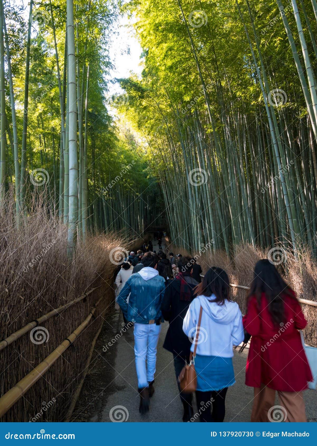 Turista que anda na floresta de bambu