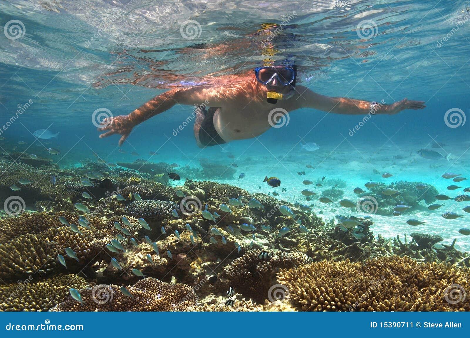 Turista snokelling en un filón coralino - Maldives