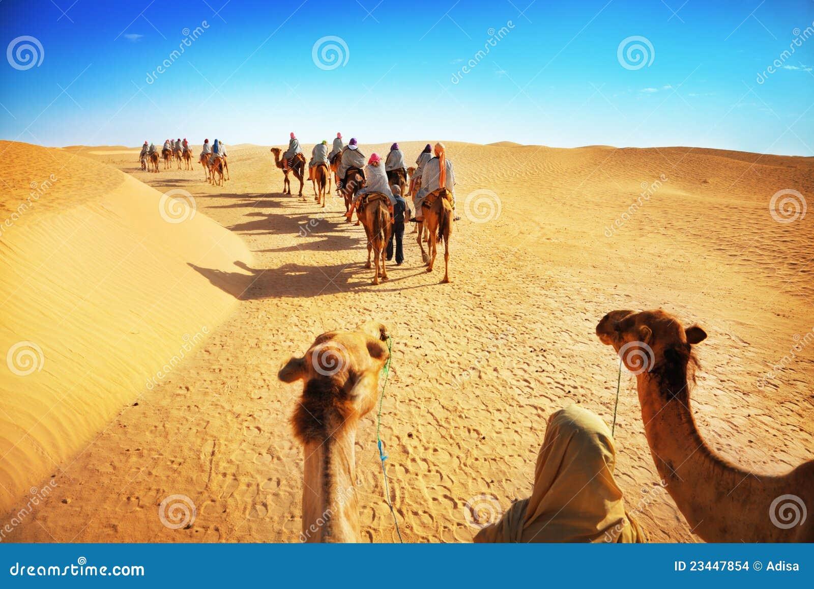 Turistas en camello