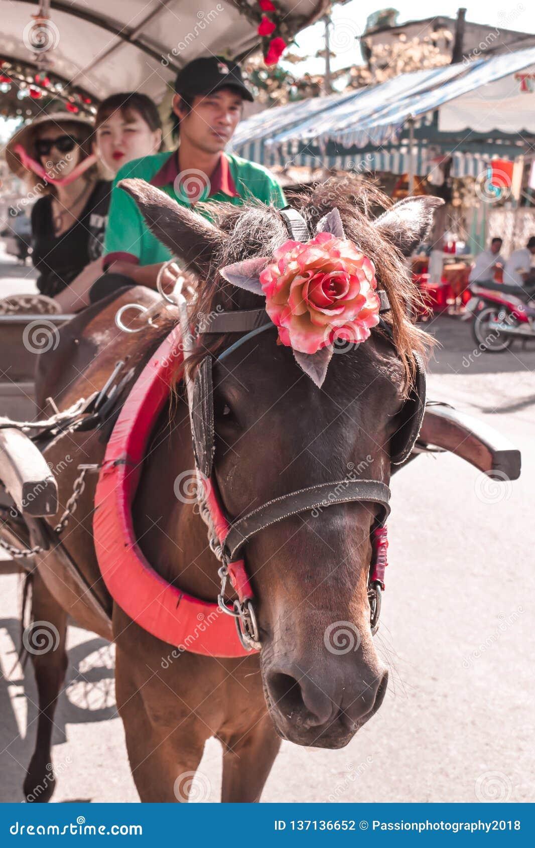Turistas levando do carro do cavalo no delta Vietname de Mekong