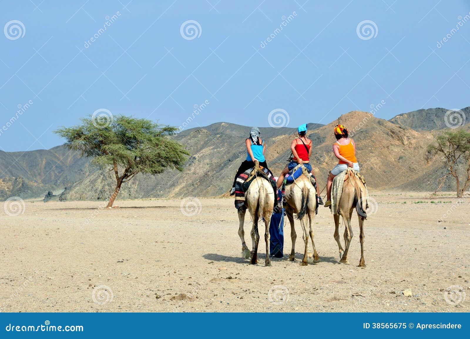 Turistas no camelo