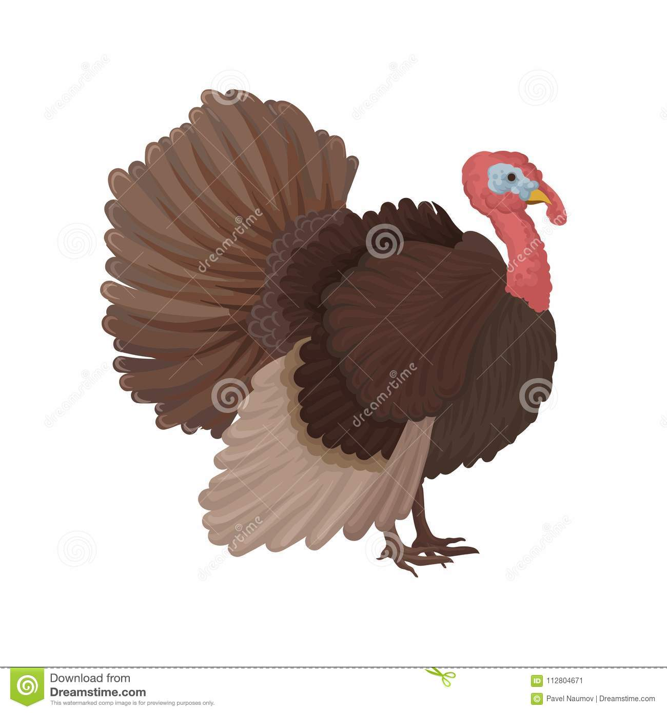 Turkey bird, poultry breeding vector Illustration on a white background