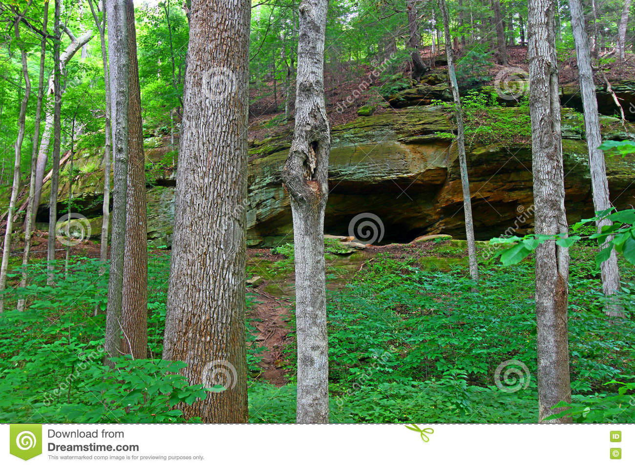 Turkey Run Forest Indiana stock photo  Image of north - 80086980