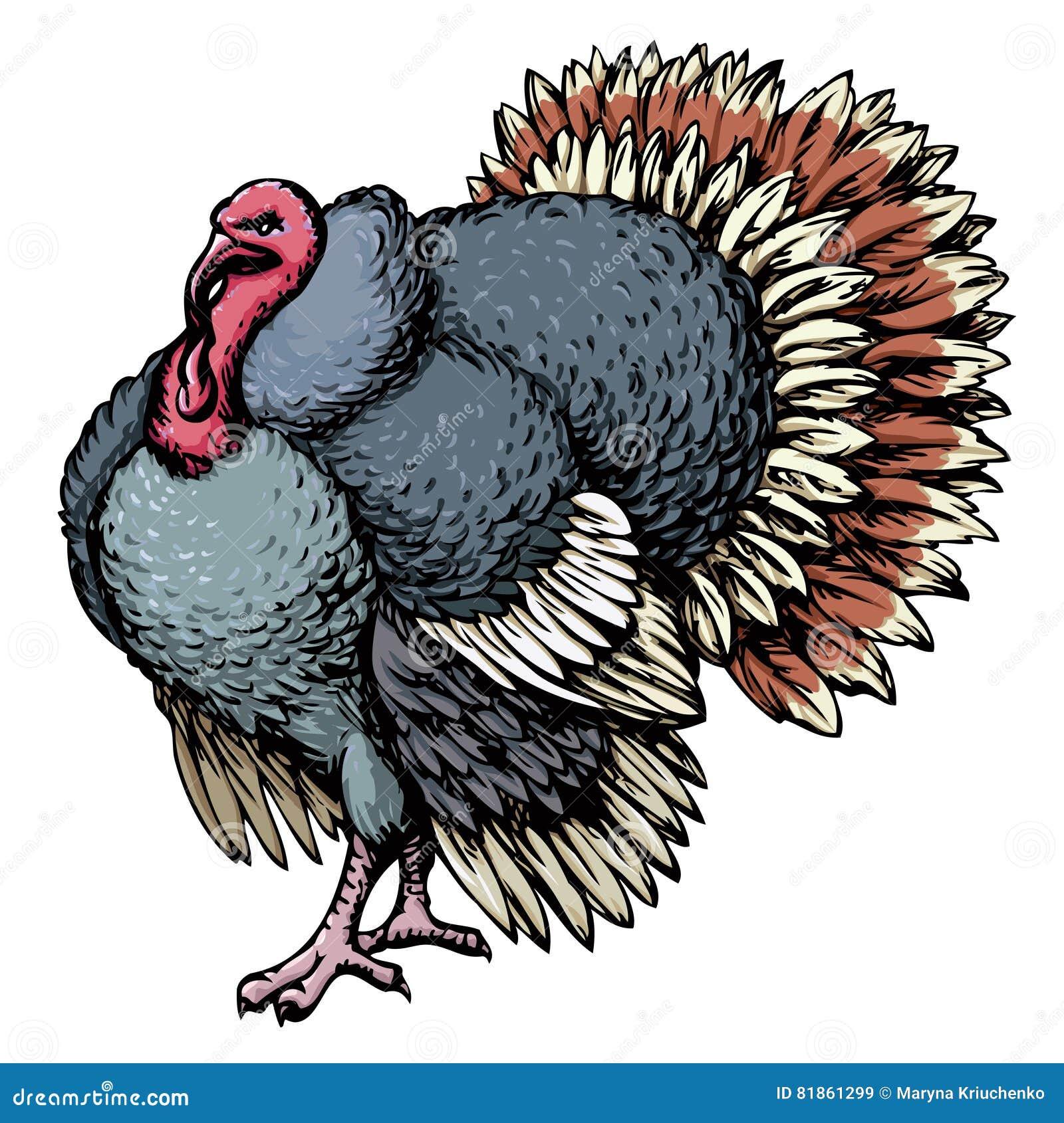 turkey vector drawing stock vector image 81861299