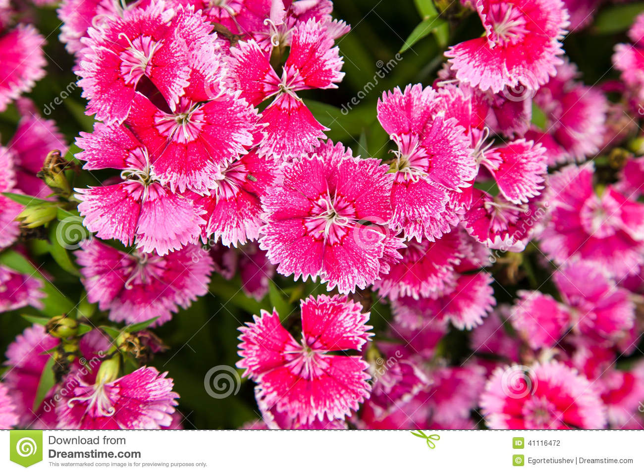 Small pink and white flowers images flower decoration ideas small pink and white flowers images flower decoration ideas small pink and white flowers image collections mightylinksfo