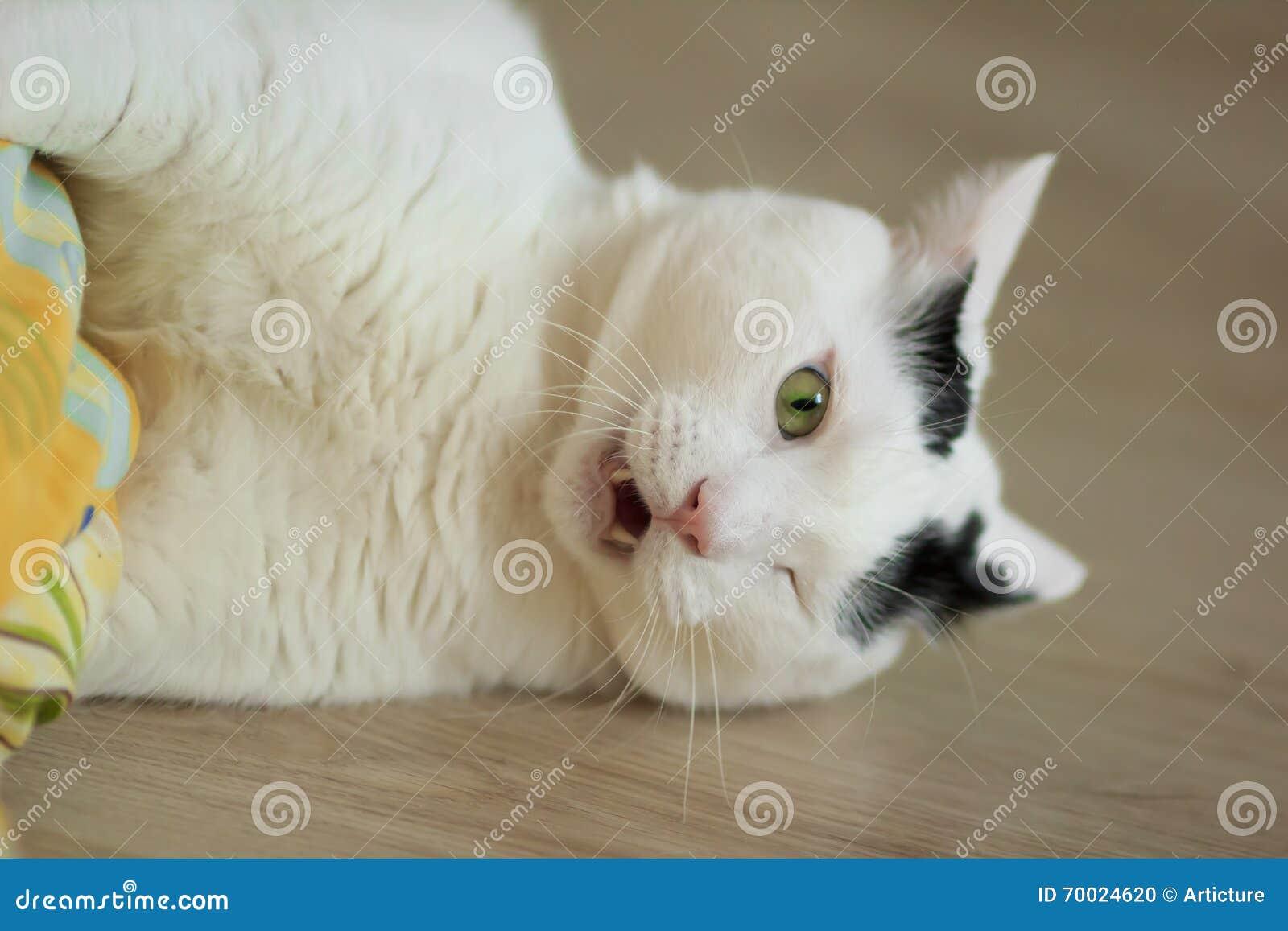 female cat calling sound